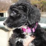 Anni as Puppy