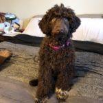 Rosie 20 weeks