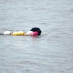 Siena swim for Line