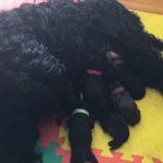 Siena feeding puppies