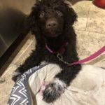 Rosie 12 weeks