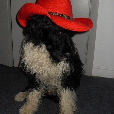 Ace in Red Cowboy Hat